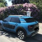 Mein kleiner Baltic-blauer Cactus...