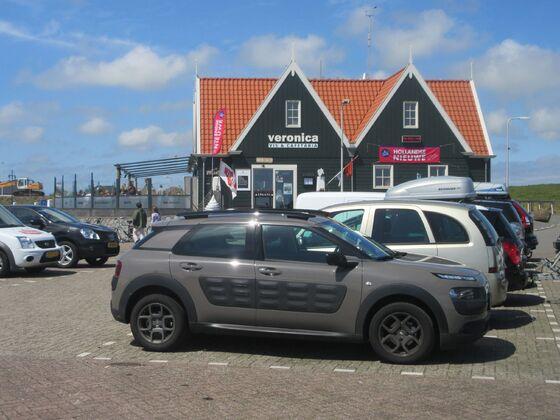 Cactus im Hafen von Oudeschild, Texel