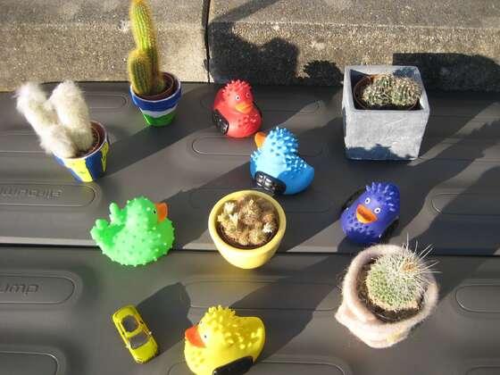 Großes Cactus-Treffen im Allgäu!!