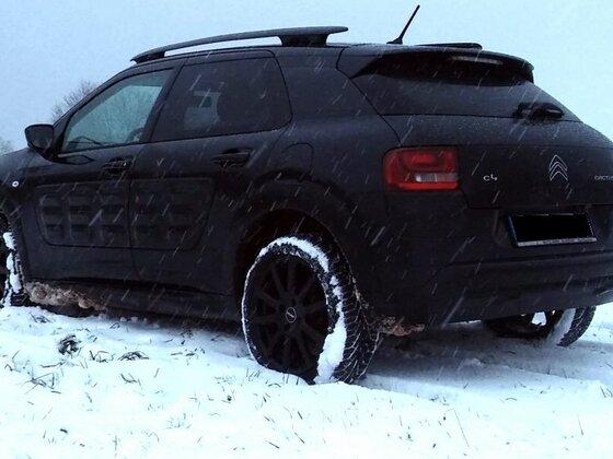 Cactus im Schnee